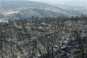 Post-fire landscape
